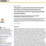 Clozapine counteracts a ketamine-induced depression of hippocampal-prefrontal neuroplasticity and alters signaling pathway phosphorylation