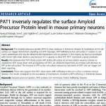 PAT1 inversely regulates the surface Amyloid Precursor Protein level in mouse primary neurons