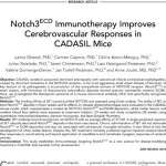 Notch3ECD Immunotherapy Improves Cerebrovascular Responses in CADASIL Mice