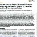 The Mechanisms Shaping CA2 Pyramidal Neuron Action Potential Bursting Induced by Muscarinic Acetylcholine Receptor Activation.pdf