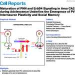 Maturation of PNN and ErbB4 signaling in area CA2 during adolescence underlies the emergence of PV interneuron plasticity and social memory