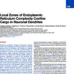 Local Zones of Endoplasmic Reticulum Complexity Confine Cargo in Neuronal Dendrites