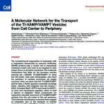A Molecular Network for the Transport of the TI-VAMP VAMP7 Vesicles from Cell Center to Periphery