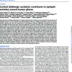 Cortical GABAergic excitation contributes to epileptic activities around human glioma